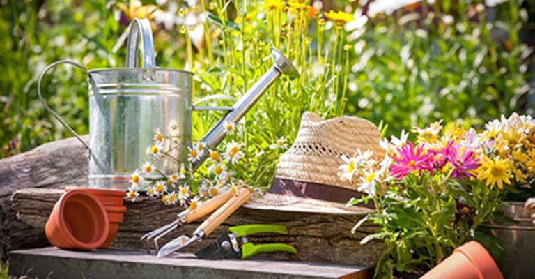 Yeni Başlayanlar İçin Hobi Bahçeciliğine Giriş